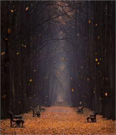 Falling Leaves Minsk Botanical Garden, Belarus, by Vlad Sokolov