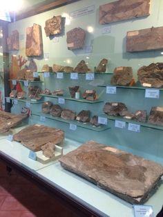 Museo dei Fossili.
