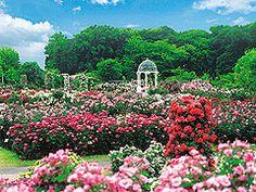京成バラ園の画像 千葉県八千代市