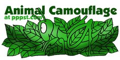 Camouflage - Animal Adaptation FREE presentations in PowerPoint format, interactive activities, lessons for K-12