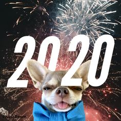 Happy New Year Everyone Funny Dogs, Funny Animals, New Year's Eve 2020, Happy New Year Everyone, Dog Modeling, Dog Bows, Sister Wedding, Typography Art, Brand Ambassador