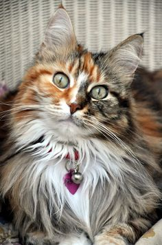 Pretty Kitty (by andrewpurkiss)