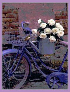 white roses on blue bike