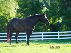 Black Horse Photo by Lume Equine Photography