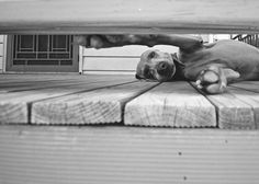 Love this dog photo. Click image to read more pet photo tips at Clickin Moms
