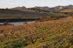 The Swartland offers both diversity and innovation | Africa Travel