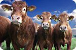 FDA allows unsafe drugs to be fed to livestock