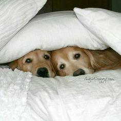 We heard a noise.......