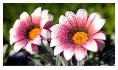 9 Beautiful HD flower Wallpaper for Desktop