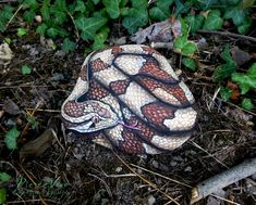 Snake painted on stone by Ernestina Gallina