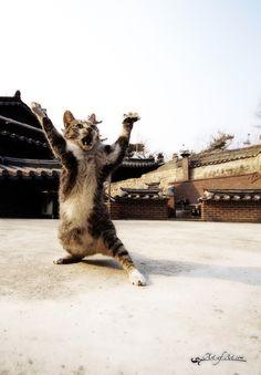 The martial art cat!