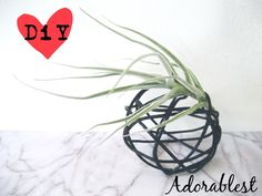 DiY - Have a Ball - Tillandsia Display Idea No. 3 | Adorablest