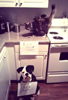 TOOLOUD I Heart My Cute Beagle Dog Adult Lounge Pants Black