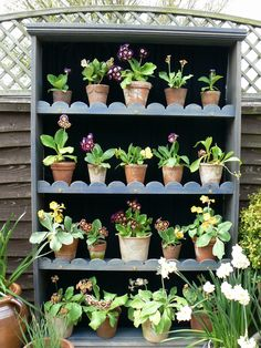 Remodel shed shelving and add scalloped trim. Gravel Garden, Garden Pots, Container Gardening, Gardening Tips, Beautiful Gardens, Beautiful Flowers, Plant Theatre, Primula Auricula, Outdoor Planters