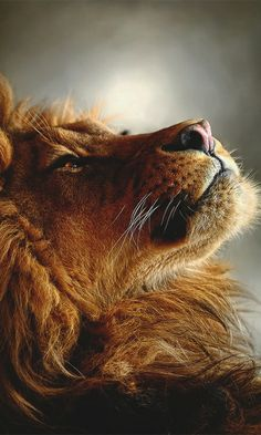 <3 A lioness does not have a mane but that's ok, we still RULE <3  Big DADDY can have the mane because he needs the drama, LOL  <3