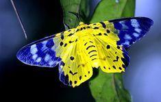 U of M moth?
