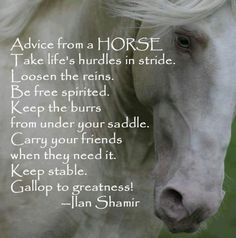 Advise from a horse...