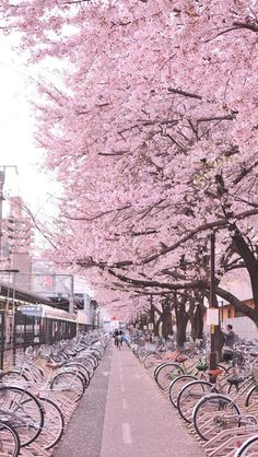 Japan street of sakura: Cherry blossom Beautiful World, Beautiful Places, Hello Beautiful, Amazing Places, Places To Travel, Places To Visit, Travel Destinations, Cherry Blossom Japan, Pink Blossom