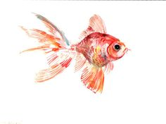 Goldfish, Original watercolor painting, 9 X 12 in, goldfish art, goldfish painting, on Etsy, $26.00