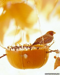 Pumpkin Bird Feeder - great way to use shell after using for pies