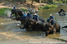 Elephants taking a Bath - Lampang, Thailand by uncorneredmarket, via Flickr