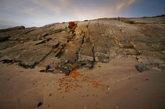 Land Art in Africa Andy Goldsworthy, Photo Competition, Environmental Art, Photo Art, Seeds, Africa, Opportunity, Roots, Nature