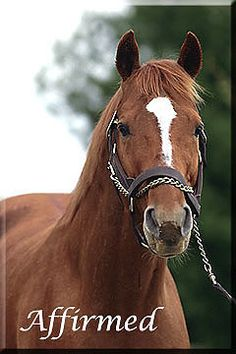 "Triple Crown Winner ""Affirmed"", One of my favorite race horses of all time!!!                                                                                                                                                      More"