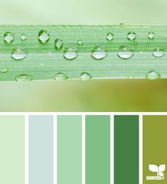 Design Seeds is a site full of fabulous eye candy. The artist finds beautiful images, and pics a color palette out of those images that you might not otherwise notice. It can be applied to home decor or clothing, I think of it when picking out color schemes for portraits. It helps your eye to see color patterns that go together.