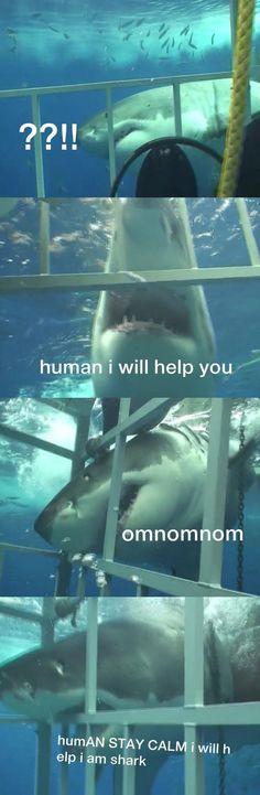 Stay calm, human… The misuderstood shark