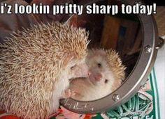 Pretty sharp!!!!!!!!!!@@@@@@@@     Dump A Day Attack Of The Funny Animals - 30 Pics