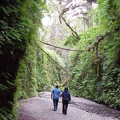 "Prairie Creek Redwoods Park is one of those unforgettable places that amazes and enchants me every time that I go there. This photo is of ""Fern Canyon"" that wanders along the coast, just past Gold Bluffs Beach. Nature seems to know best how to arrange her gardens.  http://www.parks.ca.gov/?page_id=25172"