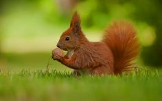 squirrel-nut.jpg (1920×1200)