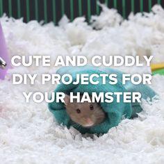 Cute And Cuddly DIY Projects For Your Hamster - Hacks/Money savers - Salud de las Mascotas Diy Hamster Toys, Hamster Life, Hamster Cages, Diy Rodent Toys, Diy Rat Toys, Hamster Habitat, Hamster Stuff, Baby Hamster, Hamster Treats