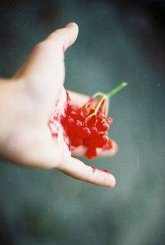 #ED2E54, Berries, Film Photography