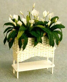 Spathiphyllum #miniatures, flower