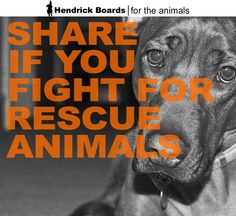 RePin if you fight for rescue animals!