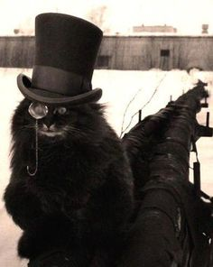 Steampunk Style for Halloween Inspiration Gato Steampunk, Steampunk Animals, Crazy Cat Lady, Crazy Cats, I Love Cats, Cool Cats, Cat Hat, Jolie Photo, Here Kitty Kitty
