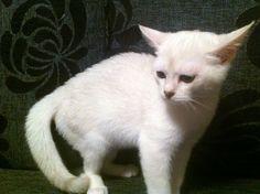 My sweet kitty