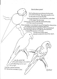 How to draw a parrot.