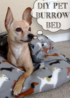 5 DIY Pet Beds For Your Favorite Pup: Just like your real kids, your fur babies deserve cool, comfortable places to lay their heads. pet projects pet projects dog pet projects to sell pet projects awesome ideas pet gate pet stairs projects for dogs Diy Dog Bed, Pet Beds Diy, Homemade Dog Bed, Photo Animaliere, Dog Clothes Patterns, Dog Crafts, Dog Items, Animal Projects, Dog Sweaters