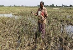 Sri Lanka plans to offer a national crop insurance scheme to help farmers cope with increasingly severe and disruptive weather and resulting crop losses. - http://www.trust.org/alertnet/news/weather-extremes-push-sri-lanka-to-adopt-crop-insurance/
