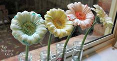 How do you make flowers change colour? Fun science experiment for spring, exploring how flowers absorb water, and testing which colour flowers absorb best.
