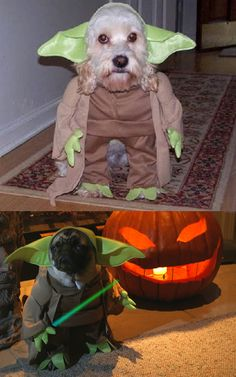 hilarious dog costume  @Clare Cornyn