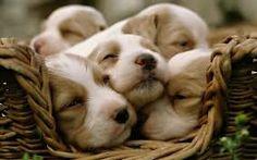 Billedresultat for cute hunde