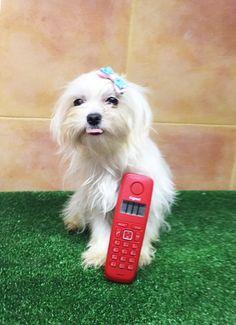 El teléfono mide 14 cm¿a que soy pequeñita? 626.54.54.75