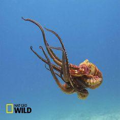 1photo: An Octopus | Positive Flower