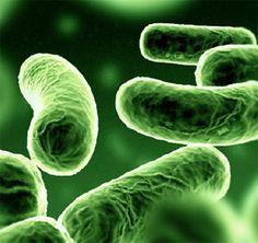 de manier waarop ziektes worden behandeld en hoe ze ontstaan, door bevoorbeeld hygienische problemen hoort hier ook bij