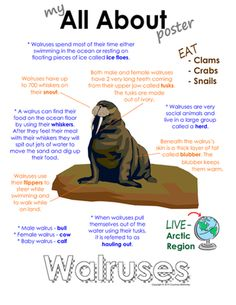 My All About Walrus Book - (Arctic/Polar Animals) from Courtney McKerley on TeachersNotebook.com (9 pages)