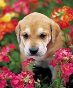 14 Tips and Tricks for Training a New Puppy! at TheFrugalGirls.com #puppies
