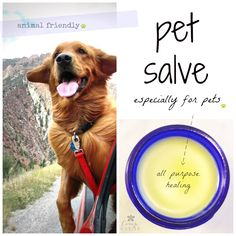 Animal Friendly Organic Pet Salve Safe for sores, wounds, hot spots, dry skin and sunburned noses. - Tap the pin for the most adorable pawtastic fur baby apparel! You'll love the dog clothes and cat clothes! Dog Hot Spots, Essential Oils Dogs, Oils For Dogs, Freundlich, Diy Stuffed Animals, Pet Health, Health Tips, Dog Care, Puppy Care